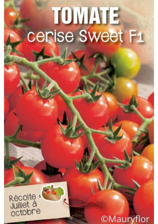 Tomate 'Sweet 100'